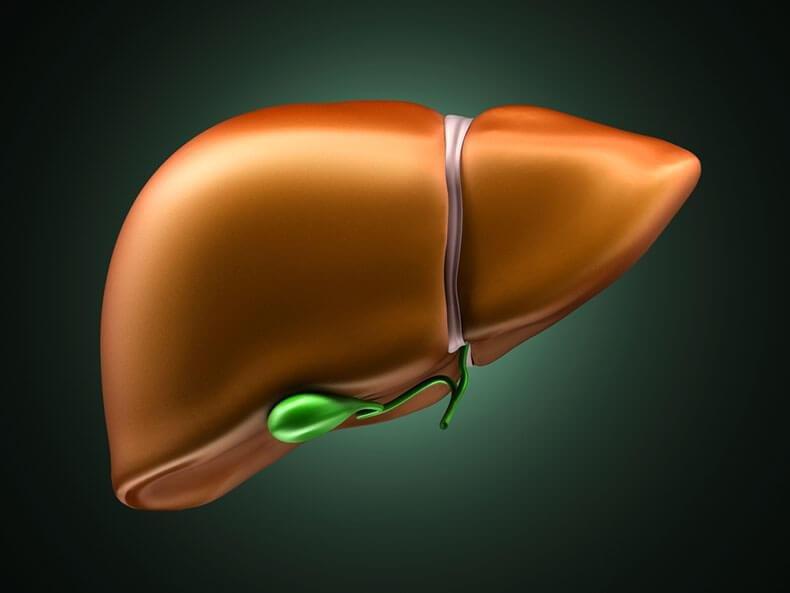 УЗД печінки і жовчного міхура